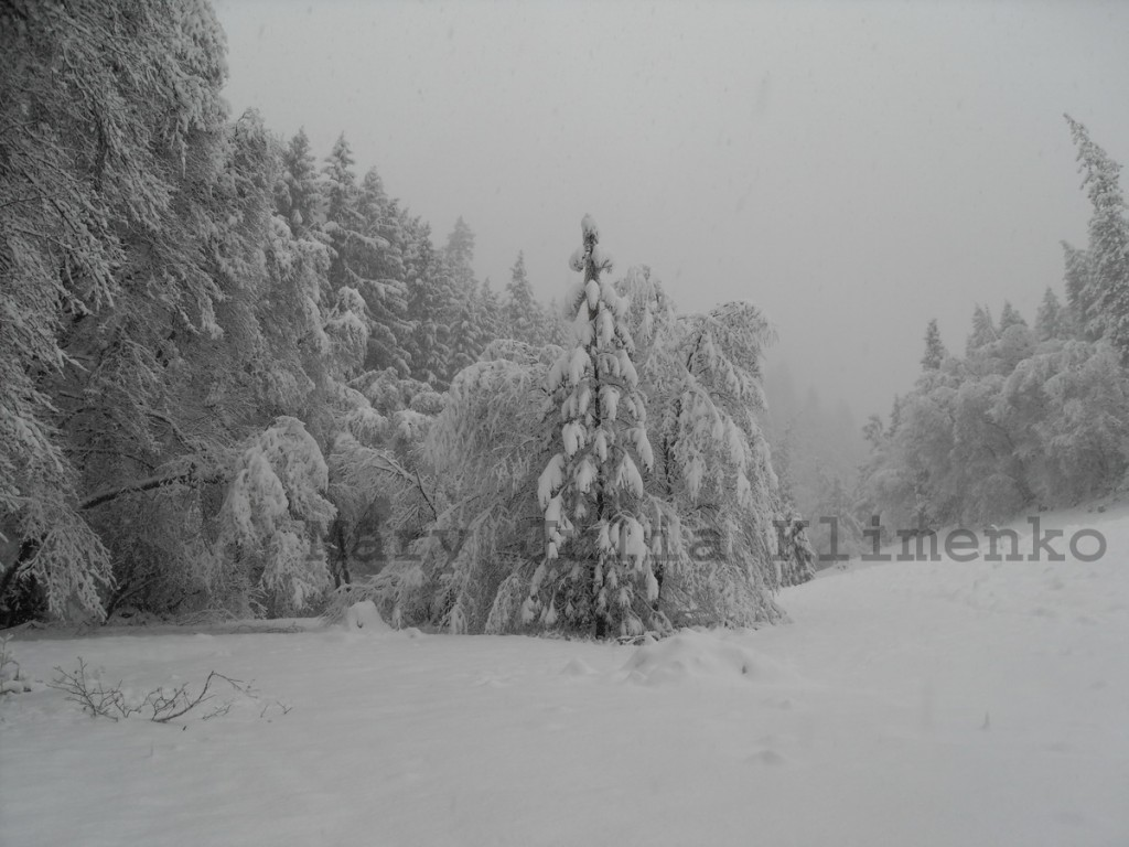 Snow Lower Meadow, 12,09, resized, watermarked
